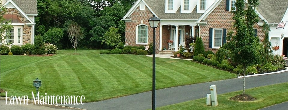 Central Coast Domestic Services | Lawn Maintenance