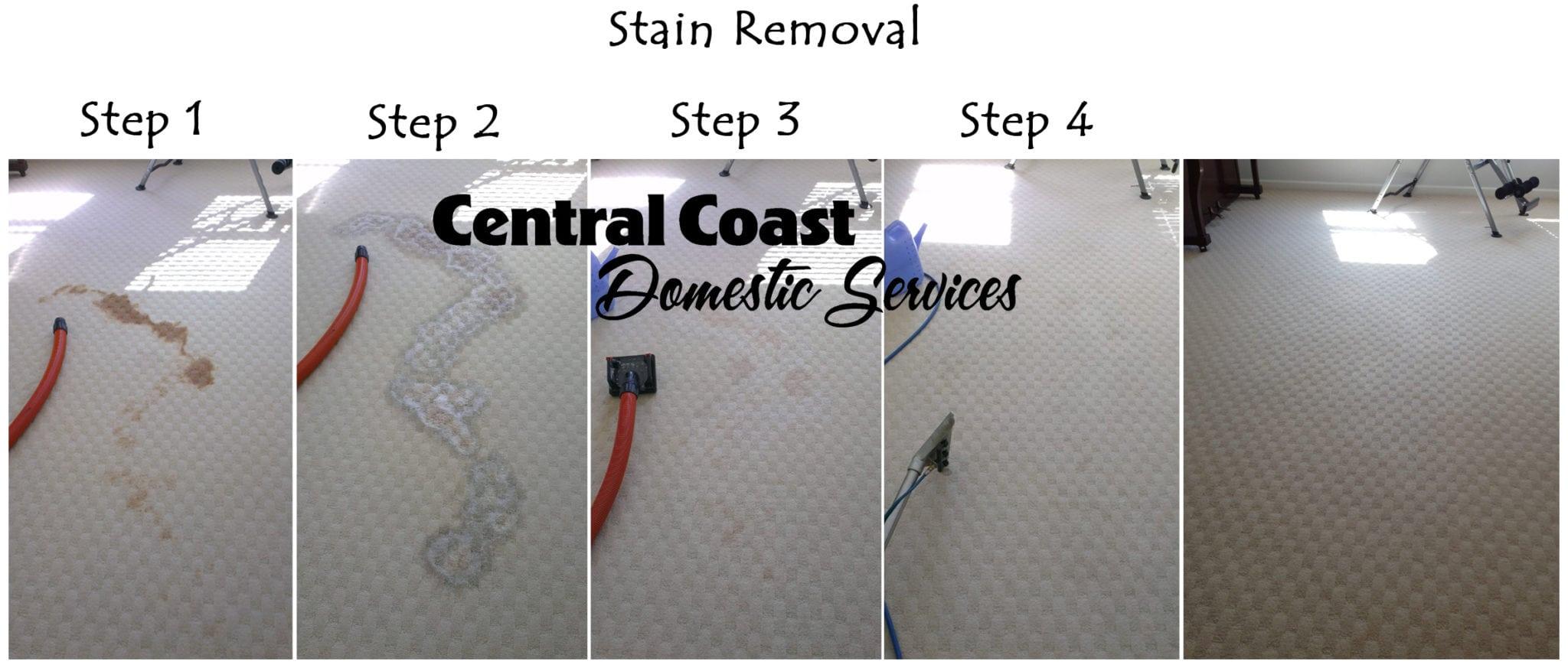 How Do I Clean Up Dog Vomit From Carpet – Meze Blog