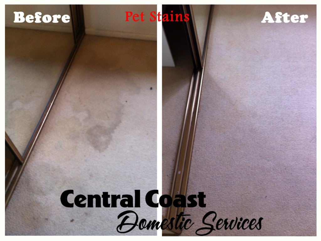 Pet Stains - Before & After