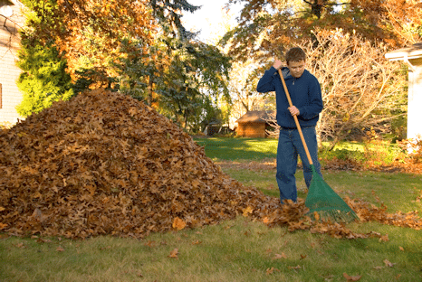 Autumn Clean Up